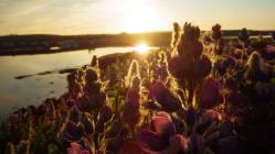 Polnočné Slnko a typické kvety, ktoré evokujú príchod leta.