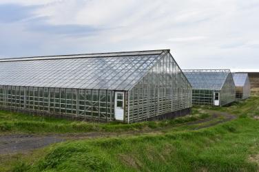 V takýchto prírodne vyhrievaných sklenníkoch pestujú zeleninu celoročne.