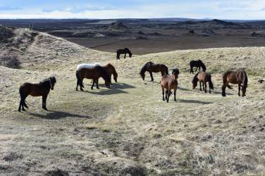 Kone zo susednej farmy.