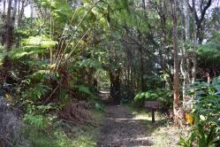 V niektorých častiach parku majú problémy s diviakmi, preto tu kvôli ochrane nainštalovali brány. Určite ich po prechode nezabudnite zavrieť.