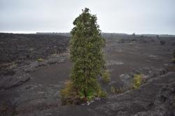 Začiatok Napau Crater Trail