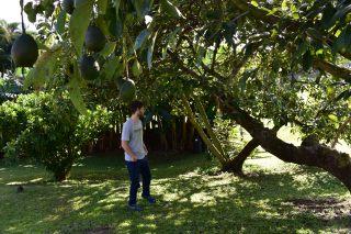 Prvýkrát sme zároveň videli avokáda priamo na strome. Bolo ich tam kopec popapadných aj na zemi, ale radšej sme ich nezbierali :D