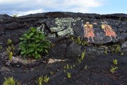 Vrátane polynézskych predkov.