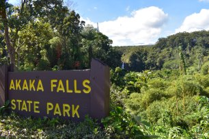 Akaka Falls park, aj s vrcholom samotného vodopádu v pozadí.